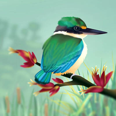 New Zealand wetland species poster vector illustration by Andrea Stark